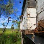 Bee-Hives-Honeybee56