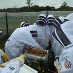 Beekeeping Lesson at St Ambrose and Buchanan High Schools - Plan Bee Ltd