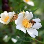 Bee and Flowers - Plan Bee Ltd