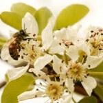 Bee pollinating flowers - Plan Bee Ltd