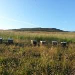 Hives on a field - Plan Bee Ltd