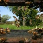 Hive Entrance - Plan Bee Ltd