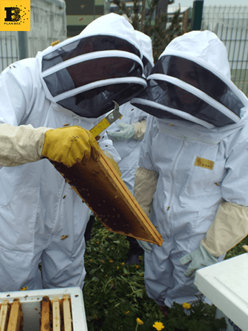 Beekeeping club at St Ambrose High School & Buchanan High School - Balfour Beatty - Plan Bee Ltd