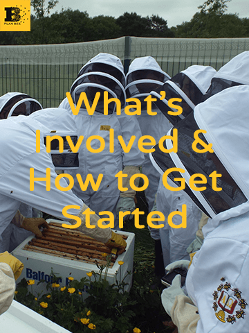 What's involved & how to get started - Plan Bee Ltd