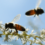 Aiport - Honey Bees - Plan Bee Ltd