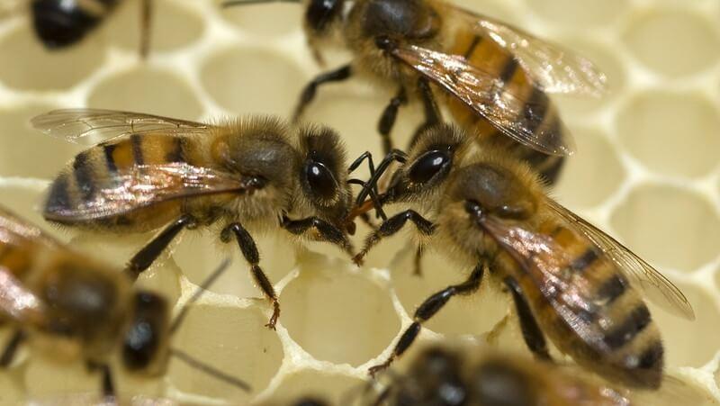 Food of Love February: Honey Bee Kisses - Plan Bee