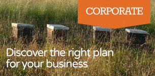 Discover the Right Plan for Your Business - Plan Bee Ltd