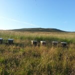 Hives on a field - Plan Bee Ltd