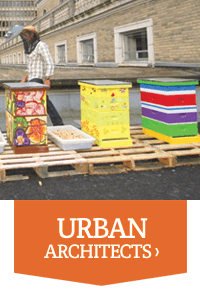 Plan Bee For Business - Urban Architects - Plan Bee Ltd