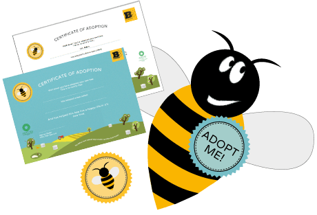 Adopt a Bee Certificate - Plan Bee Ltd