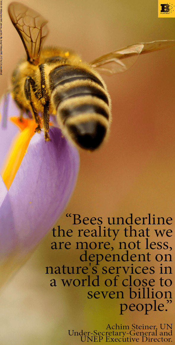 Picture and Quote of the Week 19-05-14 - Plan Bee Ltd