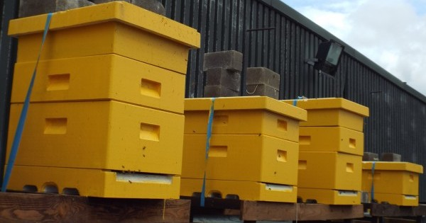 Beehives on our roof - Plan Bee Ltd