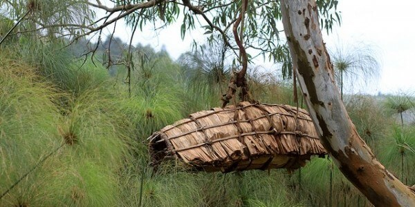 Beehive in Uganda - Adam Cohn - Plan Bee Ltd