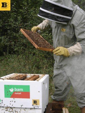 BAM Nuttal have adopted beehives from Plan Bee Ltd