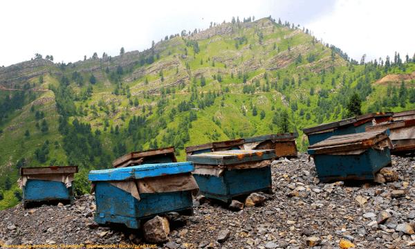 Beehives in Pakistan - Paul Snook - Plan Bee Ltd