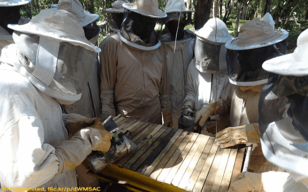 Beekeeping in Kenya - The Michis - Plan Bee Ltd 1