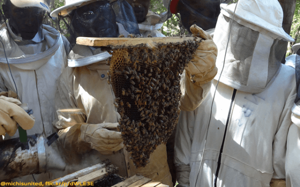 Beekeeping in Kenya - The Michis - Plan Bee Ltd 2