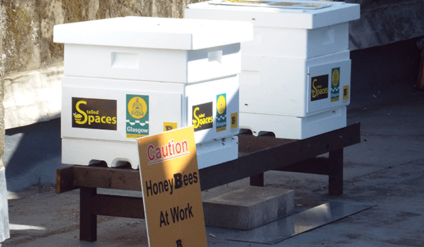 Glasgow City Council - Bee Hives - Plan Bee Ltd