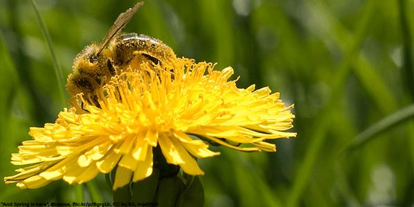 Golf Course - Honeybee Pollinating - Plan Bee Ltd
