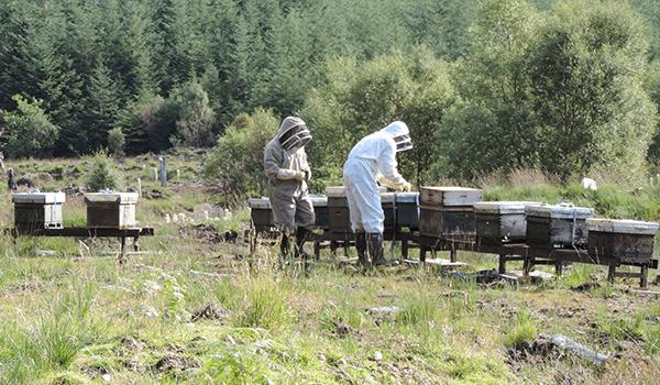 Highland Titles - Bee Hives - Plan Bee Ltd