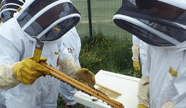 Warren Bader - Beekeeping Lesson - Plan Bee Ltd