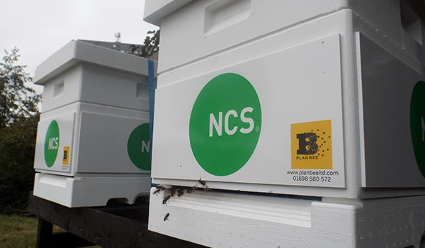 NCS Group Ltd - Bee Hives - Plan Bee Ltd