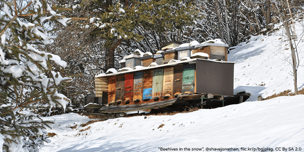 Cosy Hive - Beehives in the snow - Plan Bee Ltd