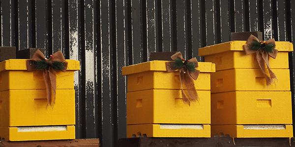 Cosy Hive - Plan Bee Ltd