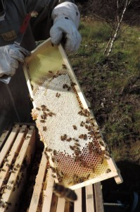 Plan_Bee_Ltd_Hives_Highland_Titles_Beekeeping