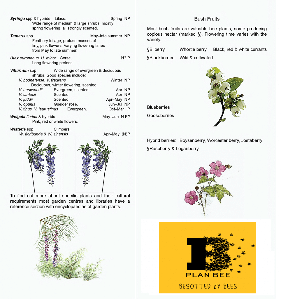 shrubs for bees plan bee ltd