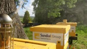Sundial Hives