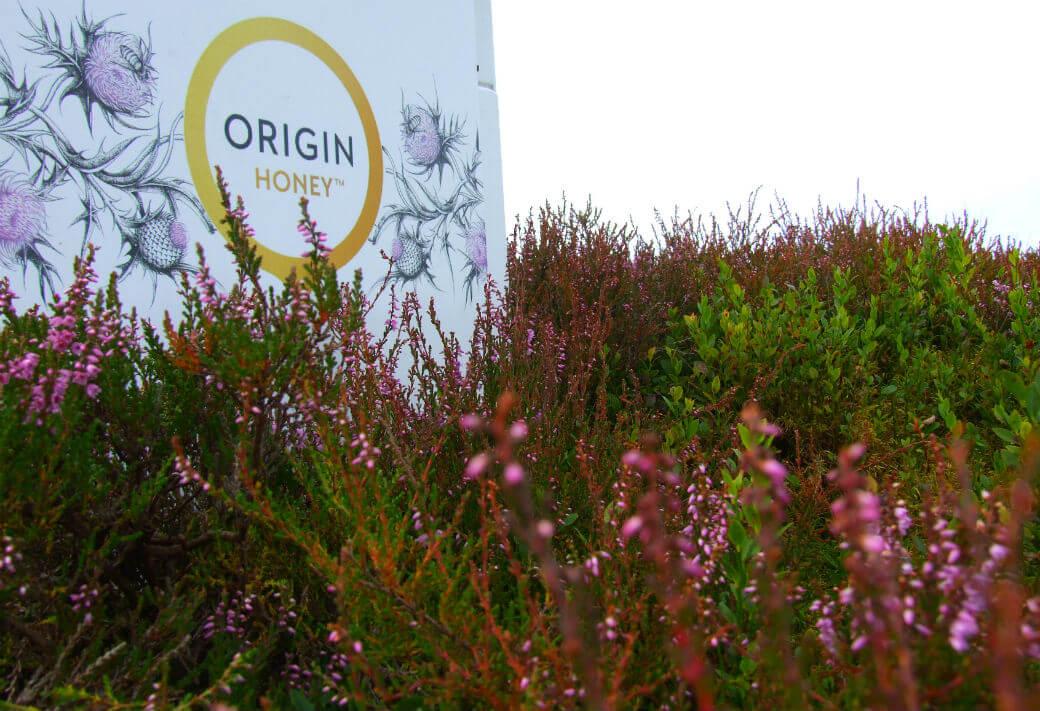 Origin Web1