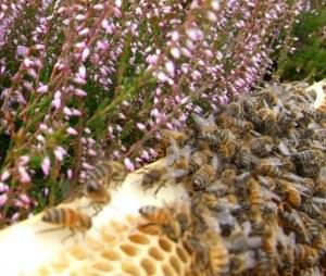 Honeycomb Bees Web2