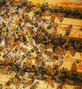 Beehive Development Executive